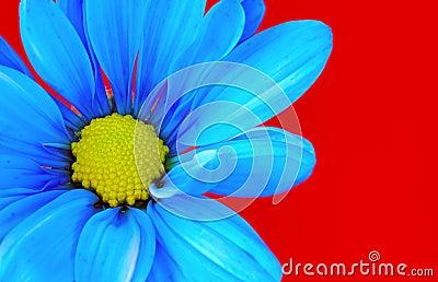 μπλε λουλούδι
