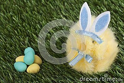 Μπλε bunny να κοιτάξει επίμονα