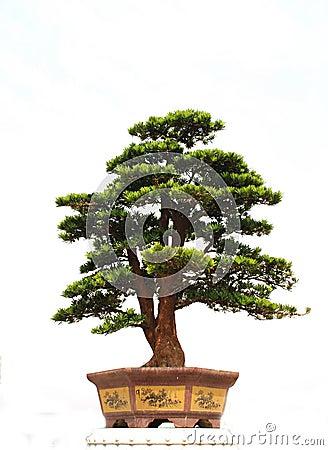 μπονσάι