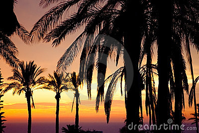 μπροστινή όψη ηλιοβασιλέμ&alph