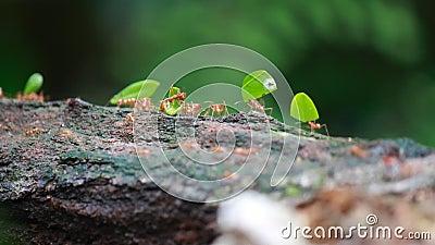 Μυρμήγκια στην εργασία απόθεμα βίντεο