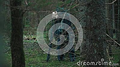 Μυστικό τέρας με το κρανίο του ζώου που στέκεται στο πυκνό δάσος φιλμ μικρού μήκους