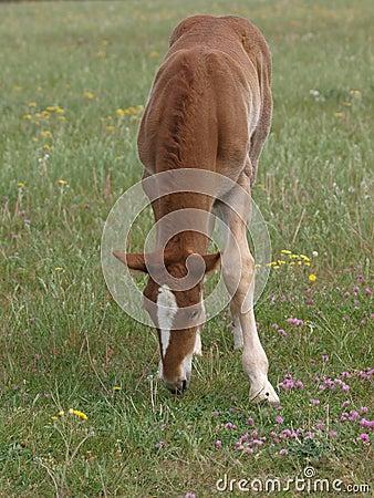 Νέο Foal