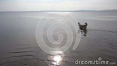 Νερό και σκυλί απόθεμα βίντεο