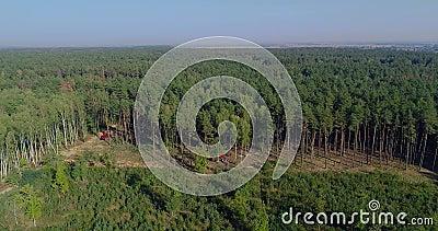 Νομική αποψίλωση, αποκατάσταση δασικής περιοχής για αποψίλωση, σύγχρονη υλοτομία απόθεμα βίντεο