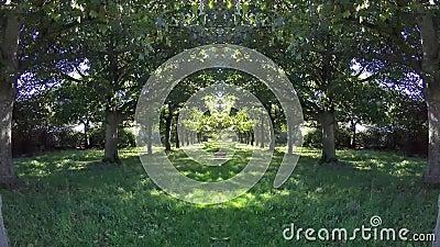 Ξύλα treeline Timelaps απόθεμα βίντεο