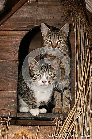 οικογένεια γατών