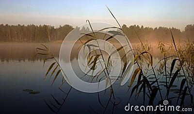 ομιχλώδες ΙΙΙ πρωί λιμνών