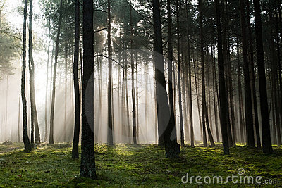 ομιχλώδης δασικός misty παλα