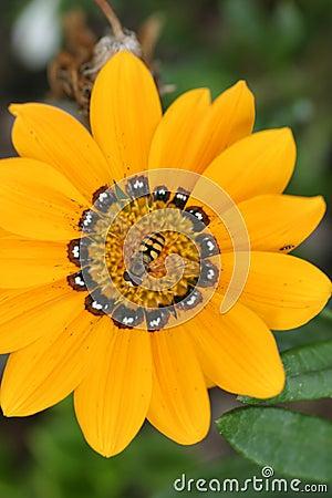 ομορφιές κίτρινες