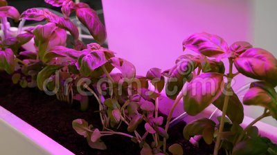 Οργανικός υδροπονικός φυτικός κήπος Τεχνητά καλλιεργημένες συγκομιδές απόθεμα βίντεο