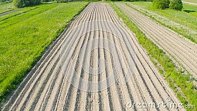 Οργώνοντας furrows εδάφους για να φυτεψει τις αγρονομικές εγκαταστάσεις μεταξύ της επαρχίας των δέντρων χλόης και λιβαδιών, εναέρ απόθεμα βίντεο