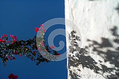 ουρανός λουλουδιών
