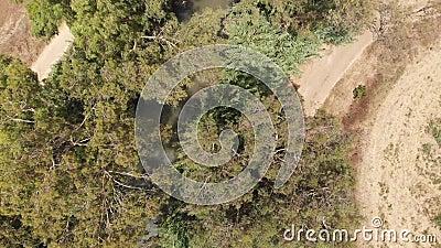 Ο ποταμός Yarkon Nahal HaYarkon είναι ο μεγαλύτερος παράκτιος ποταμός στο Ισραήλ Βιντεογραφία από ένα drone σε κατακόρυφη θέση απόθεμα βίντεο