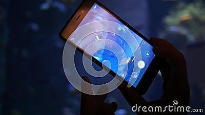 Ο υποβρύχιος κόσμος στην κινητή τηλεφωνική οθόνη, χέρι κάνει μια φωτογραφία με τα διαφορετικά εξωτικά ψάρια απόθεμα βίντεο