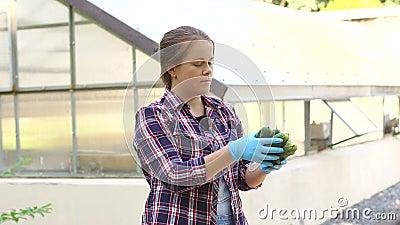 Ο όμορφος θηλυκός αγρότης πορτρέτου στα μπλε γάντια κρατά μια συγκομιδή αγγουριών φιλμ μικρού μήκους