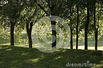 πάρκο βραδιού θερμό
