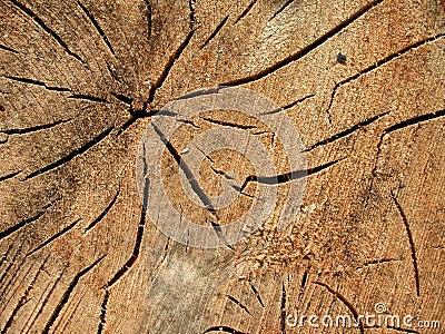 παλαιό δάσος σύστασης σιταριού ρωγμών