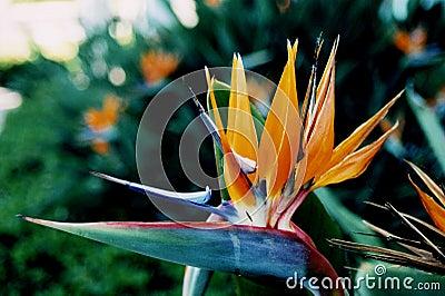 παράδεισος λουλουδιών πουλιών τροπικός