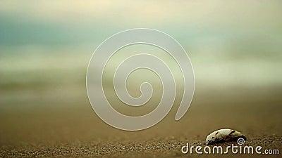 Παραλία και κοχύλι απόθεμα βίντεο