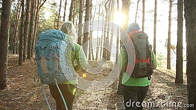 Πεζοποριεις άνθρωποι - δύο γυναίκες οδοιπόρων που περπατούν στο δάσος στην ηλιόλουστη ημέρα απόθεμα βίντεο