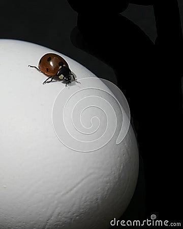περιπέτεια ladybug