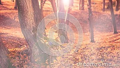 Πεσμένος βγάζει φύλλα το ομιχλώδες δάσος φιλμ μικρού μήκους
