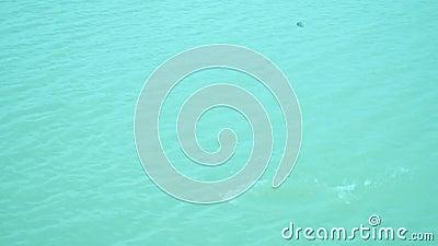 Πετά μια πέτρα στο ποτάμι με νερό να ξεπλένεται, νερό να ξεπλένεται με αργή κίνηση φιλμ μικρού μήκους