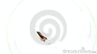 Πεταλούδα μέσα στο γυαλί απόθεμα βίντεο
