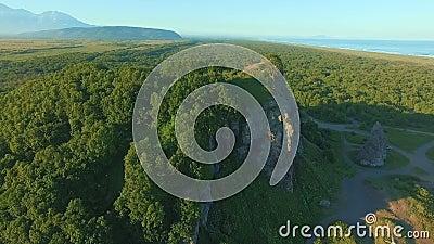 Πετώντας πέρα από τα όμορφα ηλιόλουστα δασικά δέντρα στο βουνό Εναέριος πυροβολισμός καμερών Πανόραμα τοπίων φιλμ μικρού μήκους