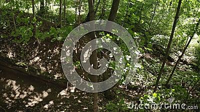 Ποδηλάτης ποδηλάτης που κάνει ποδήλατο σε απότομη στροφή στο δάσος Ποδηλάτης ιππασία απόθεμα βίντεο