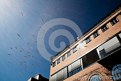 πουλιά που χτίζουν την κορυφή