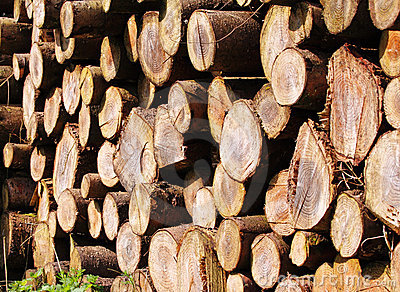πριονισμένη σωροί ξυλεία