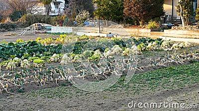Προαστιακός φυτικός κήπος απόθεμα βίντεο