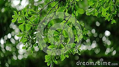 Πτώσεις βροχής στην πράσινη άδεια Βροχερή ημέρα r φιλμ μικρού μήκους