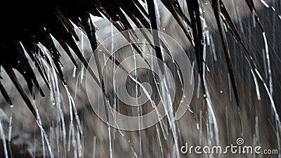 Πτώση σταγόνων βροχής από τη στέγη downpour τροπικό φιλμ μικρού μήκους