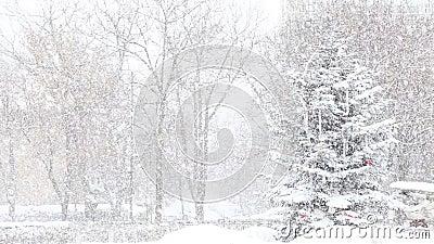 Πτώση χριστουγεννιάτικων δέντρων και χιονιού απόθεμα βίντεο