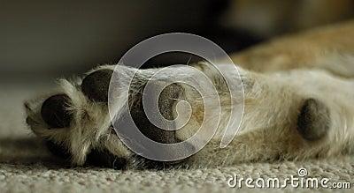 πόδι σκυλιών