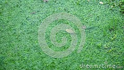 Ράντισμα πτώσης βροχής από το νερό λακκούβας στο gardenfield φιλμ μικρού μήκους