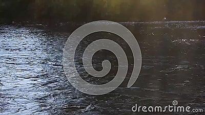 Ρηχός ποταμός που τρέχει πέρα από τη δύσκολη επίπεδη πέτρα shallows απόθεμα βίντεο