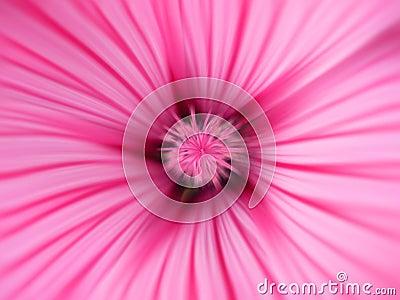 ροζ λουλουδιών