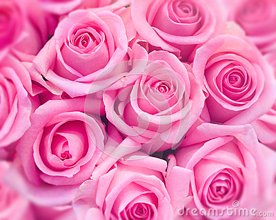 ρόδινα τριαντάφυλλα