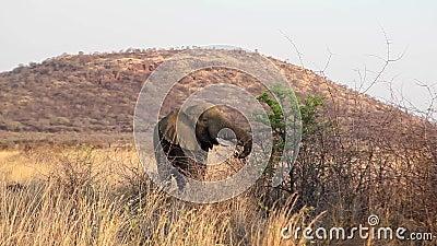 Σίτιση ελεφάντων από το δέντρο απόθεμα βίντεο