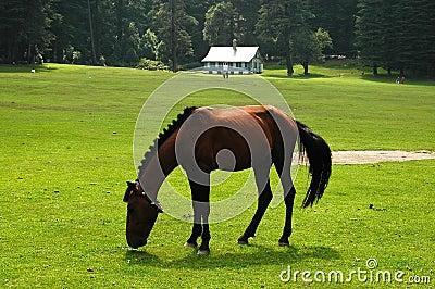 σκοτεινό άλογο