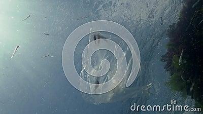 Σκουπίδια στο νερό, σακούλα από πολυαιθυλένιο σκοτώνει θαλάσσια ζώα, γαρίδες πεθαίνουν Οικολογία της φύσης, πλαστικό φιλμ μικρού μήκους