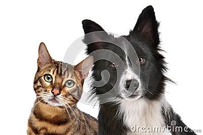 σκυλί γατών