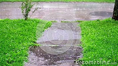 Σταγόνες βροχής που πέφτουν στο πράσινο σχέδιο απόθεμα βίντεο