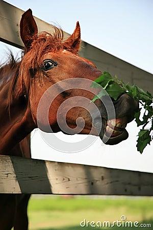 στενό άλογο επάνω