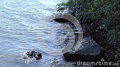 Τα κύματα στο Δούναβη απόθεμα βίντεο