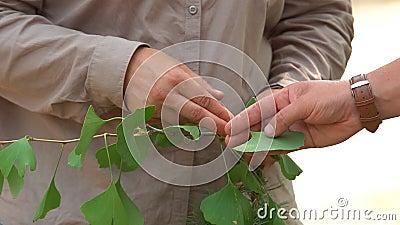 Τα χέρια των ανδρών κρατούν ένα φυτό φιλμ μικρού μήκους